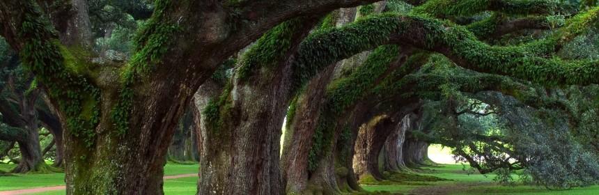alberi_spettacolari
